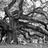 We came, we got naked, we loved a tree!…The Angel Oak Tree.
