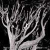 Cypress Body 2