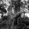 Eucalyptus Union