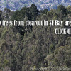 forest-East-Bay-hills-Save 100,000 trees from clearcut