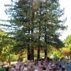 Redwoods Glen