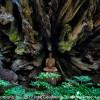 Root Buddha
