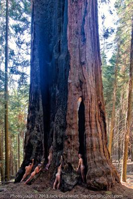 "on the ""Giant Sequoias Experience"" (see Events)"