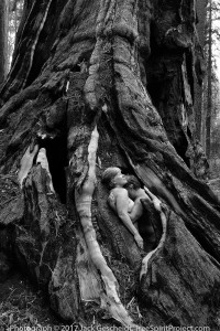 Sequoia-Couple-TreeSpirit-Project-by-Jack-Gescheidt-IMG-7981-BW-1000-pixel-WEB.jpg