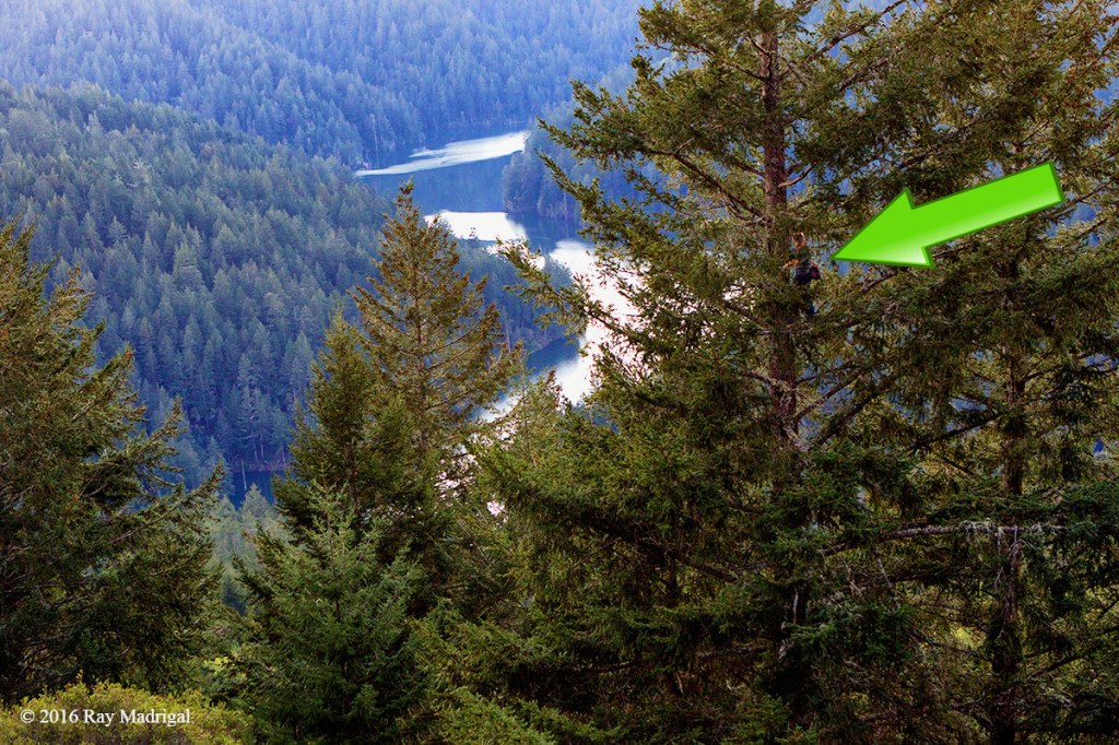 Jack-tree-climb-west-Marin-by-Ray-Madrigal-1200p-WEB.jpg