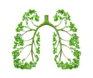 Lungs-Tree.jpg