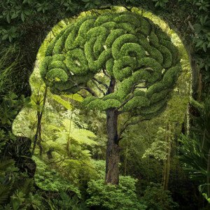 Nature-greenery-trees-Brain-KALW-sm