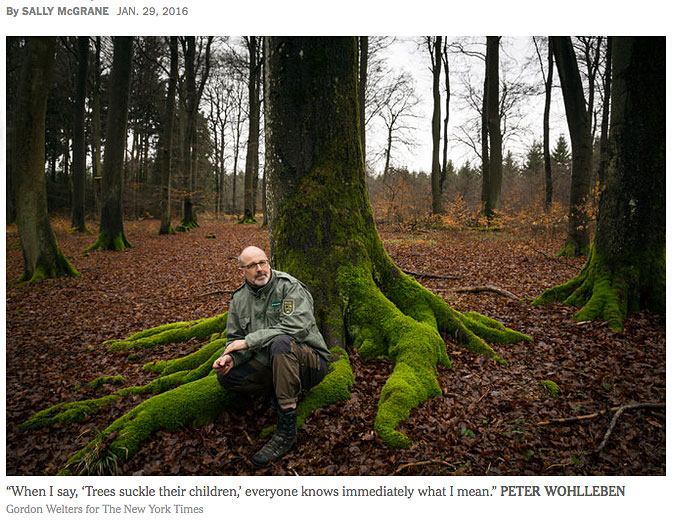 Peter-Wohlleben-The-Hidden-Life-of-Trees-NY-Times-1.29.16-WEB