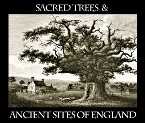 Sacred-Trees-Ancient-Sites-of-England-flyer-v1-Bowthorpe-Oak-drawing-v3-WEB