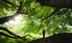 South-Korean-forests-heal-people-article.png