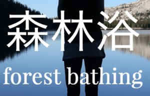 forest-bathing-Shinrin-Yoku.png
