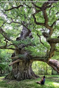 Sitting-With-Majesty-TreeSpirit-Project-4546-900p-WEB.jpg