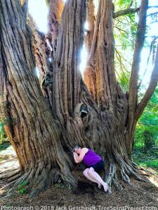 Tandridge-dreams-TreeSpirit-Project-8946-800p-WEB