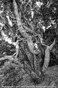 TreeSpirit-Project-oak-couple-Keith-7364-800p-WEB.jpg