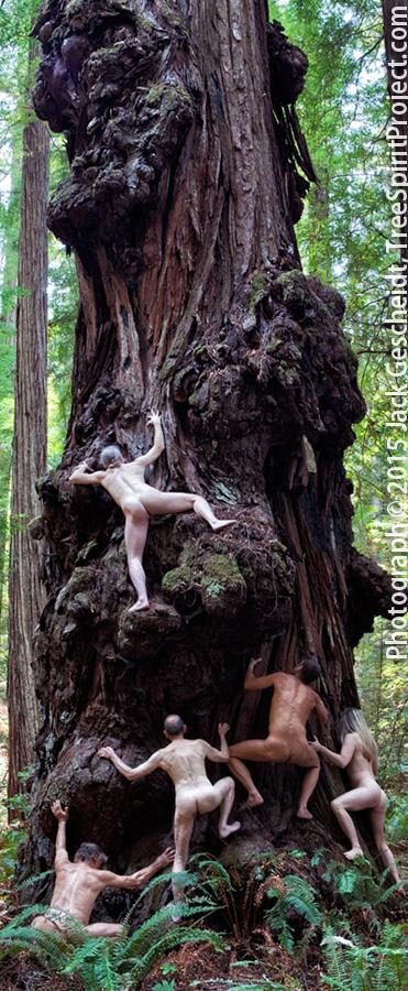 TreeSpiritProject-Jack-Gescheidt-0227-900p-CROP-NARROW-900p-WEB