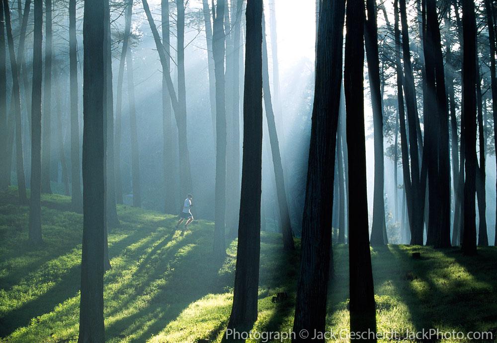 fog_trees_presidio_runner_rev_1000p_web