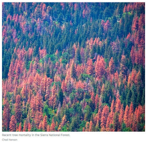 tree-MORTALITY-DYING-DEATHS-Sierra-Nevada-by-Chad-Hanson.jpg