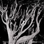 Cypress Body
