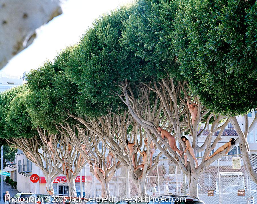 Ficus Friends Treespirit Project