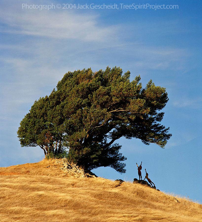 Hilltop Worship Treespirit Project