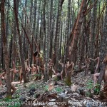 Mystic_Forest_1200pixel_v1_WEB
