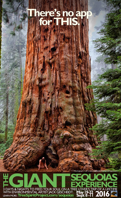 Giant-Sequoias-Experience-GSE-2016-May-19-Sept-8-no-app-AD-800p-WEB