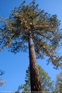 Warbler's tree sit