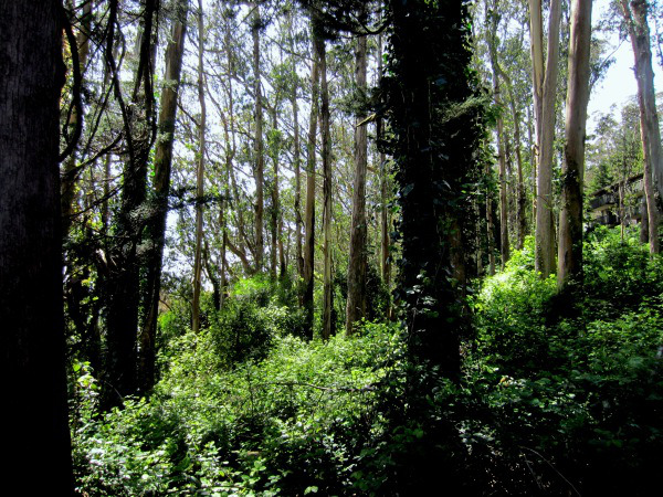 A lush Sutro forest, teeming with life and wildlife.