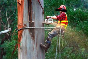 eucalyptus-chainsaw-logger-logging-600p-WEB