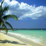 beach_palm_tree_Ocho_Rios_Jamaica_01