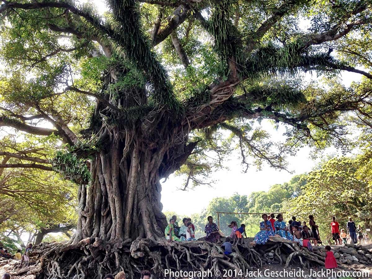 community tree, Tanna Island, Vanuatu