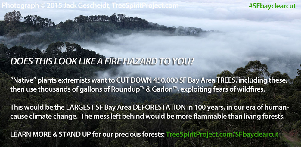 450,000-tree-clearcut-SF-Bay-FEAR-1000p-WEB