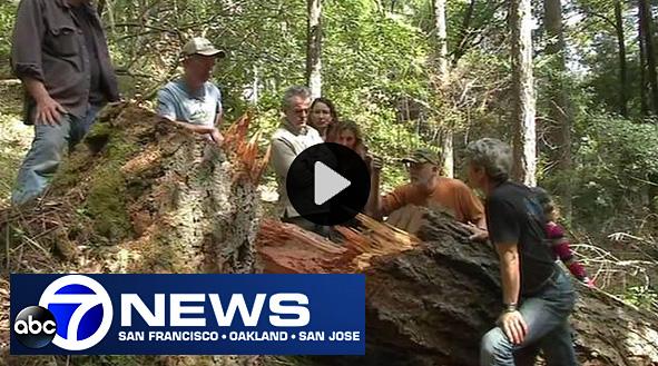 ABC-TV-7-News-trail-story-WEB