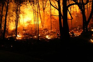 Australia-Bushfire-trees-last-to-burn
