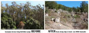 before-after-eucalyptus-forest-east-bay-v4-1200p-web.jpg