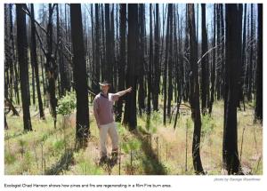 chad-hanson-fire-ecologist-rim-fire-forest-burn-regenerative
