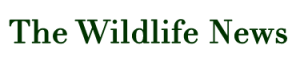 The-Wildlife-News-LOGO.png