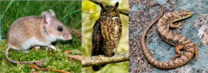 animals-in-eucalyptus-forest-Joe-McBride-talk