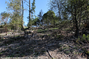 7 months after logging: a fire-prone mess baking in the sun.