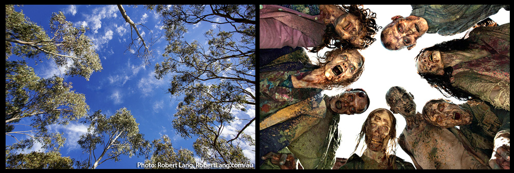 eucalyptus-trees-and-zombies-1000p-WEB.jpg