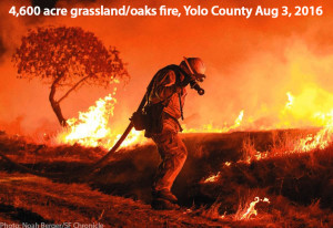 fire-grassland-oakland-cold-fire-aug-3-2016-noah-berger-web.jpg