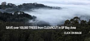 eucalpytus-forest-SF-Bay-8382-960x440p.WEB.jpg