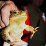 toad-Scientific-American-Brendan-Borrell.jpg