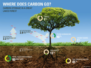 carbon-storage-Great-Lakes-forest