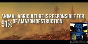 Animal-Ag-rainforest-destruction-Cowspiracy-WEB