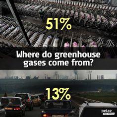 GHGs-51-percent-animal-factories-13-percent-transportation
