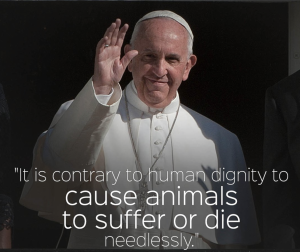 Pope-Francis-contrary-to-human-dignity-to-cause-animals-to-suffer-or-die-needlessly.jpg
