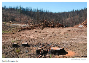 logging-after-fire-rim-fire-ca-by-george-wuerthner-web.jpg