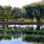laguna-del-sol-treespiritproject-5285-1200p-web.jpg