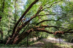 Bay-Festival-TreeSpirit-Project-1200p-WEB